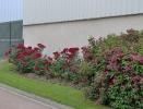 Fleurissement année 2005_7